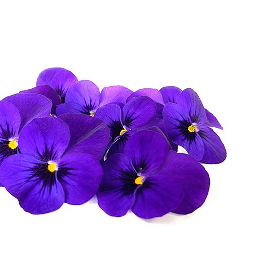 Eetbare Bloemen - Paarse Viool - Boekel AGF Horecagroothandel