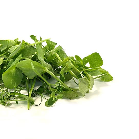 Cress - Salad Pea - Boekel AGF Horecagroothandel