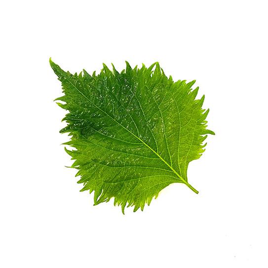 Cress - Shisho Leaves green - Boekel AGF Horecagroothandel