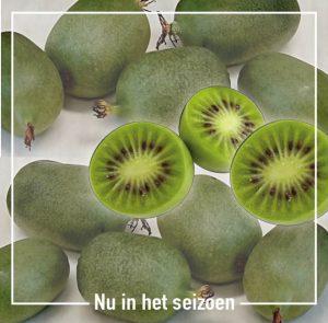 Boekel_AGF kiwibes kiwi bes