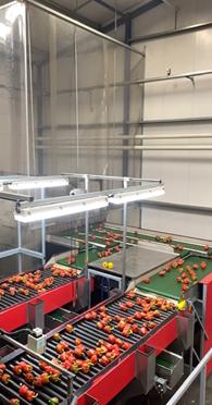 Bedrijfsbezoek sorteercentrum paprika's - Boekel AGF Horecagroothandel